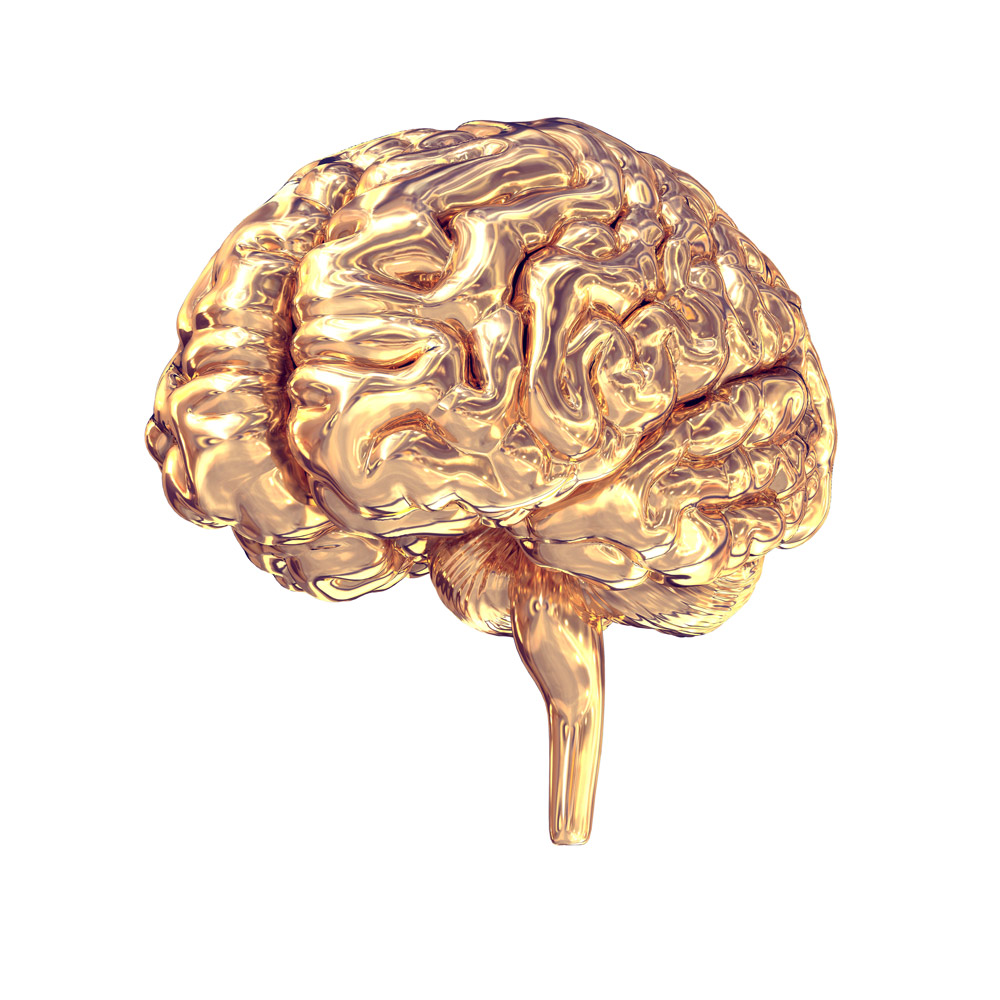 Gehirn-Seite-Neuromarekting-gold